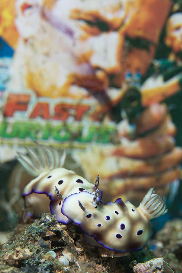 The Fast and the nudibranch