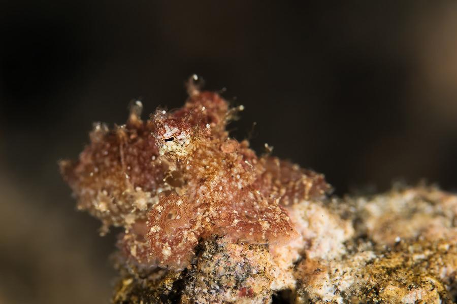 Hairy Octopuss